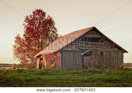 The mist rises on the fields of the Northern Finland. The old barn house is colored red by the sunset.
