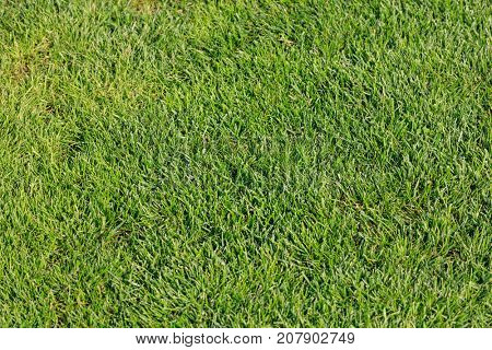 Top view of green grass for background. Abstract concept design picture backdrop for golf course and sports soccer field or add text message.