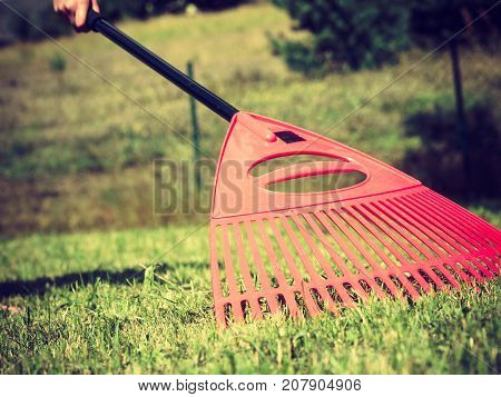 Gardening. Female adult raking green lawn grass with rake tool on her backyard wide angle view