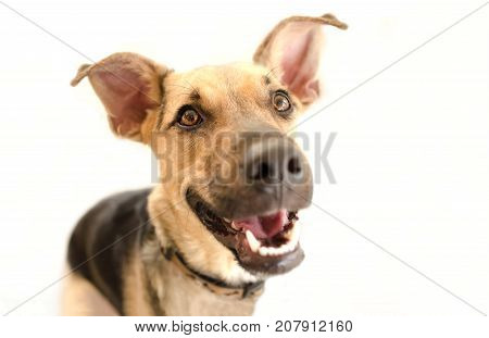 Happy dog isolated is a very excited happy looking dog with a great big smile on his face.
