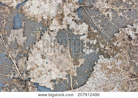 Skeletons Of Dried Leaves On Grey Background Closeup