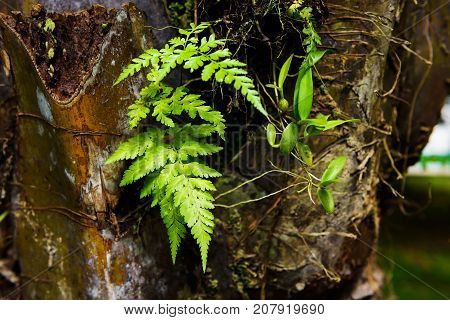 Tropical Fern Leaf On Palm Tree