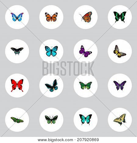 Realistic Demophoon, Birdwing, Butterfly And Other Vector Elements