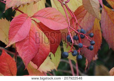 red autumn foliage -nature  autumn background