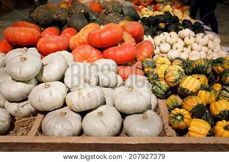 Autumn Harvested Pumpkins