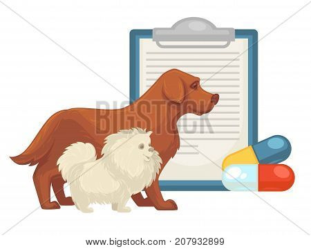 Pet vet or animal veterinary doctor or clinic flat icon of dog, cat and treatment vitamin pills, diagnosis or doctor prescription sheet.
