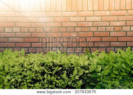 Wall Brick And Green Bush In The Park With The Sunlight. Wall Brick And Circle White Window Over Gre
