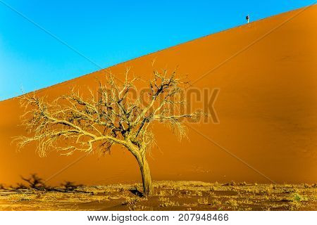 Yellow dunes of the Namib desert. Small tree in desert. Namibia, South Africa. The concept of extreme and exotic tourism