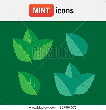 Peppermint Mint Vector. Mint Green Vector Illustration Set