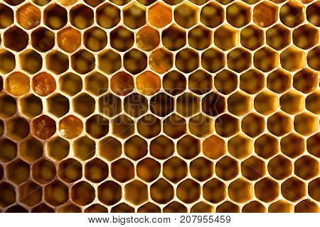 Honeycombs Filled With Honey Closeup.
