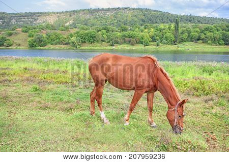rural scene with foal grazing on a grassland