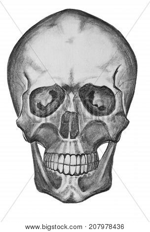 Skull on a white background. Pencil drawing