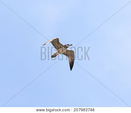 seagull flying in the sky . In the park in nature