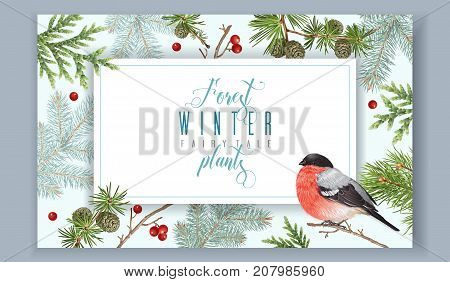 Vector vintage banner with winter forest branches and bullfinch. Highly detailed winter design for greeting cards, christmas party invitation, holiday sales. Can be used for poster, web page, packaging