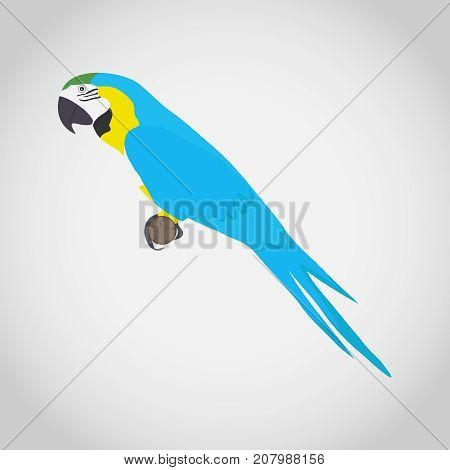 A macaw parrot a bird. Parrot ara on a white background. Flat design vector illustration vector.