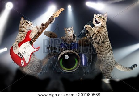 Concert of cats musicians in the light of searchlights