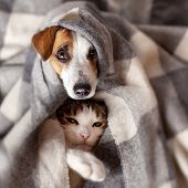 Dog and cat under a plaid. Pet warms under a blanket in cold autumn weather t-shirt