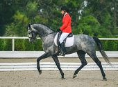 Young elegant rider woman and gray horse. Beautiful girl at advanced dressage test on equestrian competition. Professional female horse rider, equine theme. Saddle, bridle, boots and other details. poster