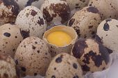 Pack of quail eggs and one open egg. poster