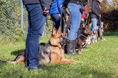Group of dogs with owners at obedience class poster