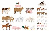 Vector farm animals isolated on white. Livestock and poultry icons for farms groceries packaging and branding poster