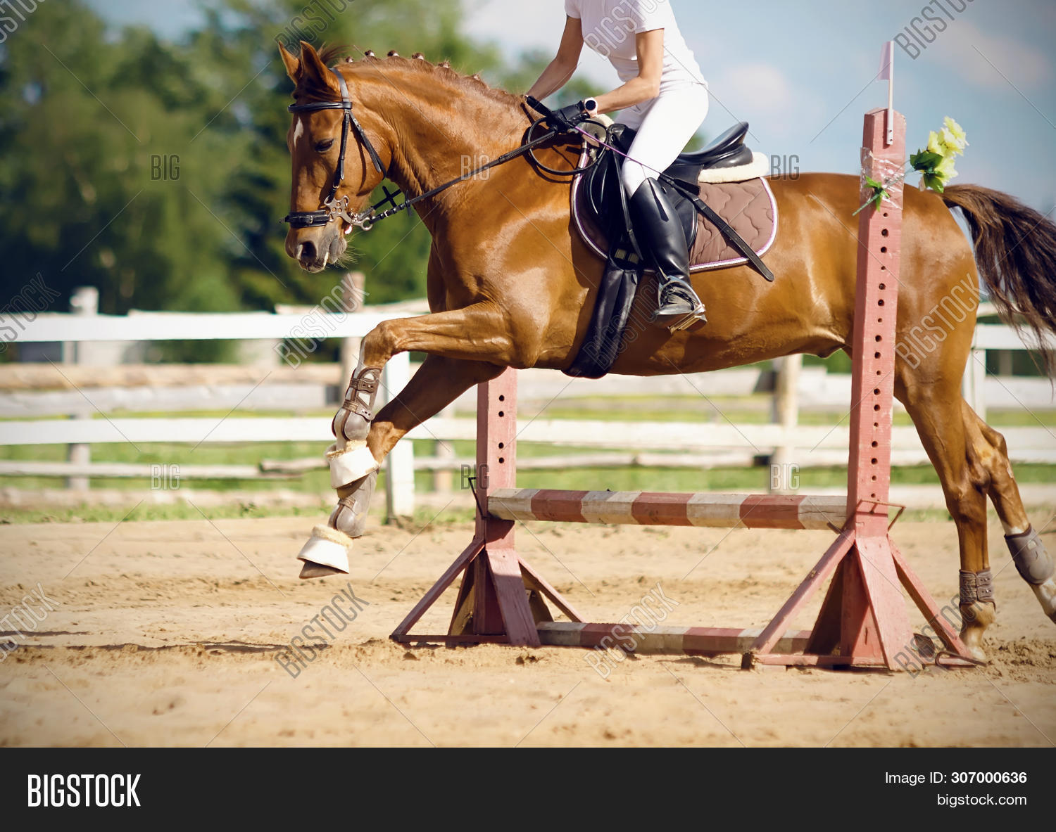 Chestnut Horse Rider Image Photo Free Trial Bigstock