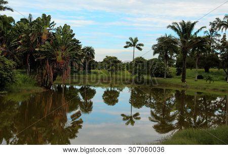 A Foto Mostra Uma Paisagem Contendo árvores E Um Lago