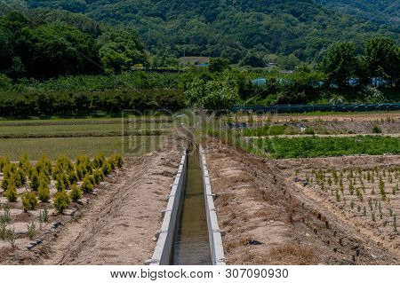 Concrete Man-made Irrigation Ditch In Rural Orchard Of Young Evergreen Saplings.