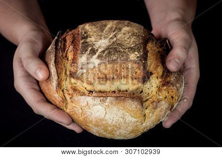 Loaf (or miche) of French sourdough, called as well as Pain de campagne, on display isolated on a black background held by female hands. Pain de Campagne is a typical French huge loaf of bread poster