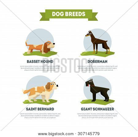 Dog Breeds Banner Template, Basset Hound, Doberman, Saint Bernard, Giant Schnauzer Vector Illustrati