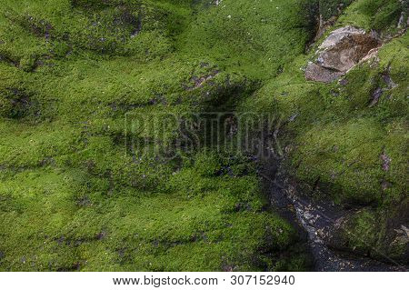 View From Above On Green Moss On The Rock