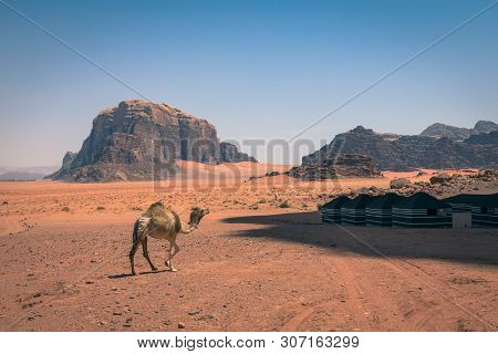 Red Sand Desert And Camels At Sunny Summer Day In Wadi Rum, Jordan. Middle East. Unesco World Herita