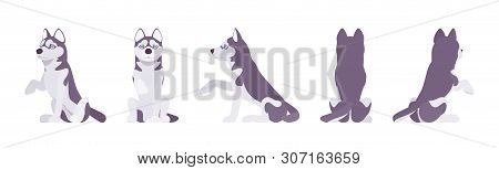 Husky Dog Sitting, Paw Giving. Northern Medium Size Compact Siberian Breed, Cute Family Companion, A