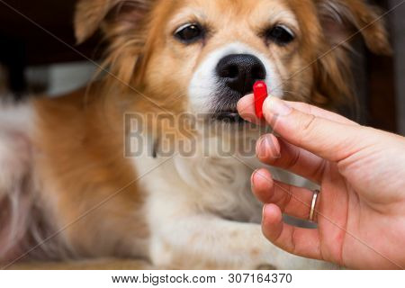 Woman Hand Holding Pills And Close-up Medicine And Medications That Are Important In Dogs. Blurred B