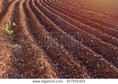 Furrows row pattern in plowed field prepared for planting crops in spring. Horizontal view in perspective poster