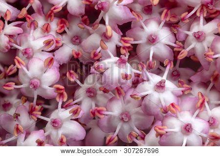 Deep focus view of elderflowers