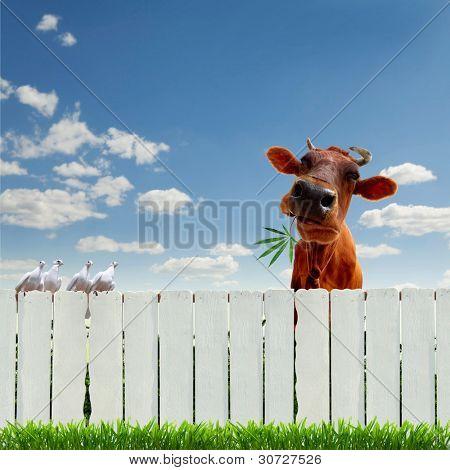 Collage with a cow zaboromi marijuana poster