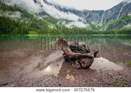 Weathered Log Sits In The Shallows Of Avalanche Lake In Montana