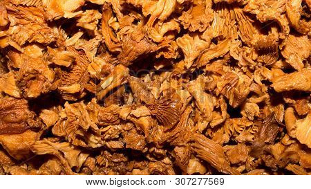 Mushrooms chanterelles soaked in water.Background of forest mushrooms chanterelles. poster