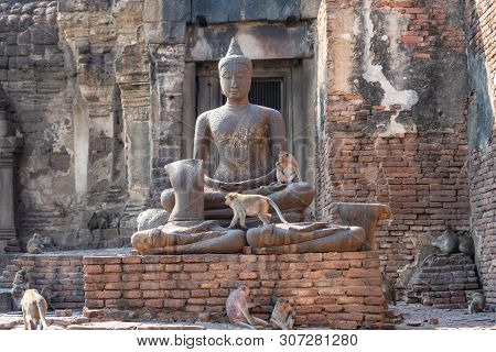 Monkeys With Stone Buddha Sculpture In Ruined Buddhist Religious Place, Phra Prang Sam Yoad In Lopbu
