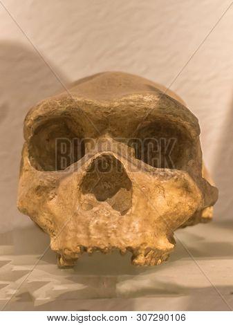 Neanderthal, Homo, Evolution, Human, Sapiens, Neanderthalensis, Skull, Biology, Skeleton, Skulls, Ed