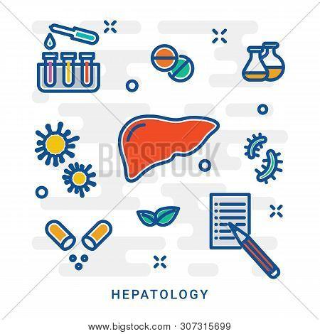Human Liver, Liver Detox, Liver Donation Vector Line Icon. Detoxification Concept. Human Liver Line
