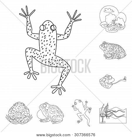 Isolated Object Of Amphibian And Animal Logo. Collection Of Amphibian And Nature Stock Vector Illust