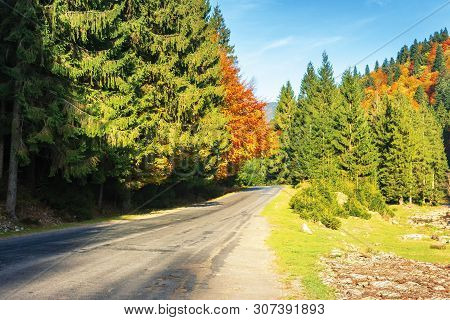 Road Through Forest In Autumn Colors. Beautiful Nature Sunny Scenery In Afternoon. Clear Bright Blue