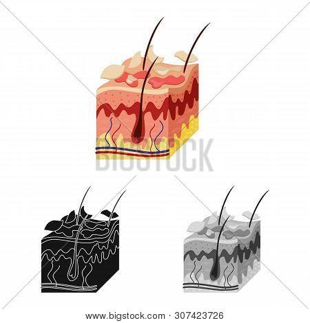Vector Illustration Of Skin And Epidermis Logo. Collection Of Skin And Tissue Vector Icon For Stock.