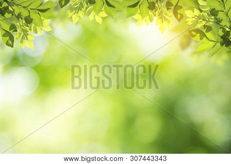 Fresh And Green Leaves Green Bokeh On Nature Abstract Blur Background Green Bokeh From Tree.mock Up