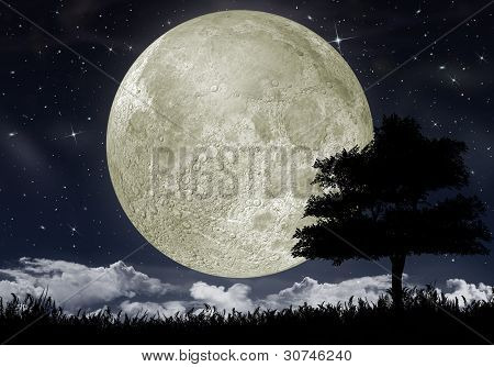 Silhouette Of A Tree Against The Big Moon