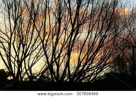 Sunset Behind Silhouette Of Branches Beside A River, Australia
