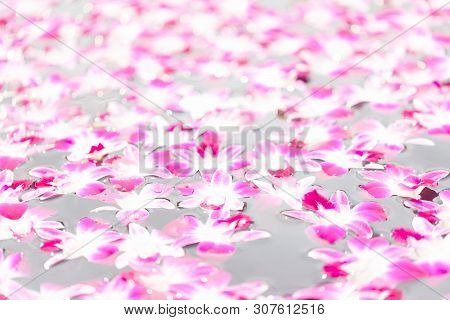 Orchid Flowers Float On The Water Surface With Blurry Bokeh Of Water Reflection