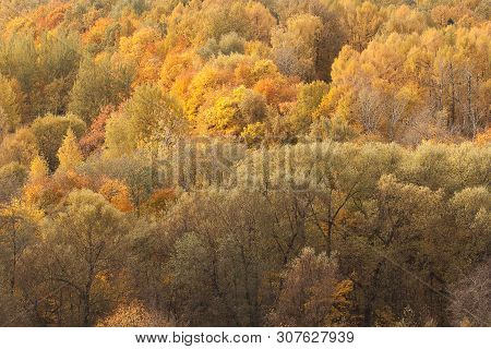 autumn sunny forest with beautiful colorful bright tree crowns